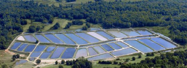 fishfarm4