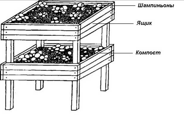 shema-viraschivaniy-shampinionov
